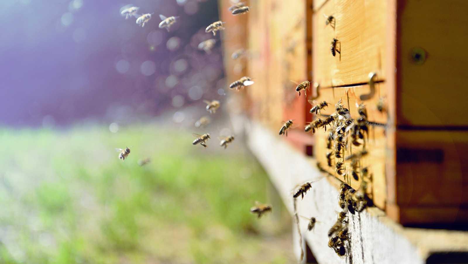 curiosidades sobre las abejas