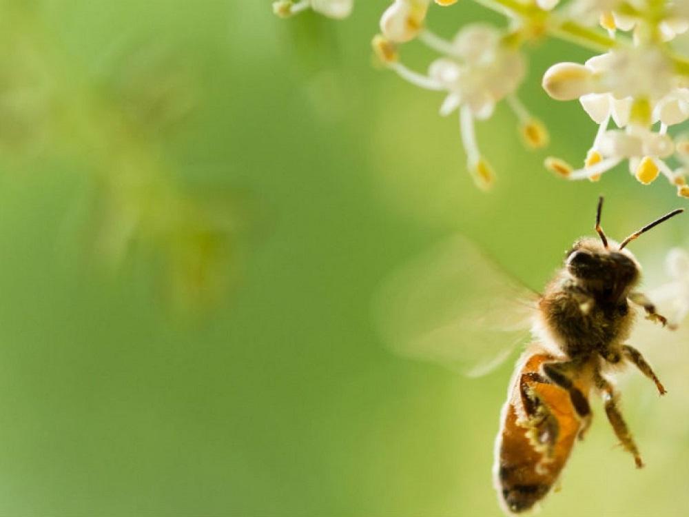 velocidad de vuelo de las abejas