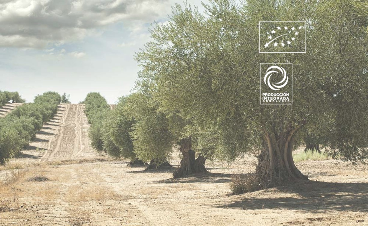 producción ecológica olivar