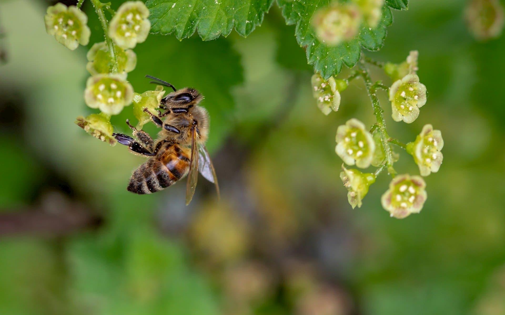 productos abejas
