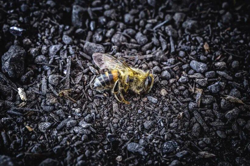 consecuencia contaminacion abejas