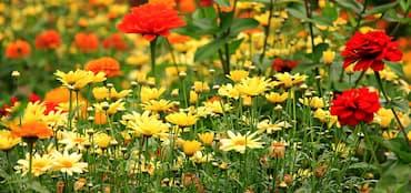 prado flores miel